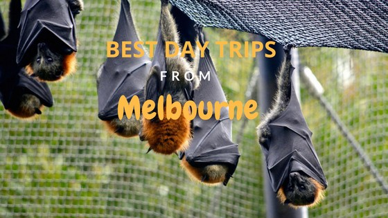 Best Day Trips from Melbourne by car